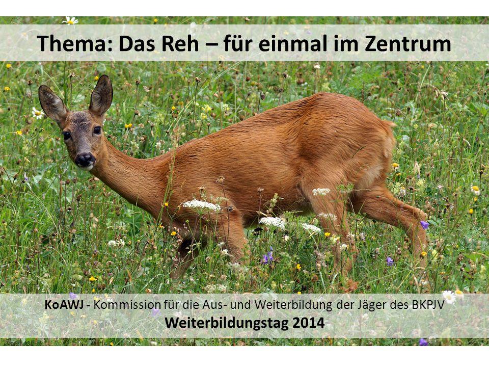Thema: Das Reh – für einmal im Zentrum KoAWJ - Kommission für die Aus- und Weiterbildung der Jäger des BKPJV Weiterbildungstag 2014