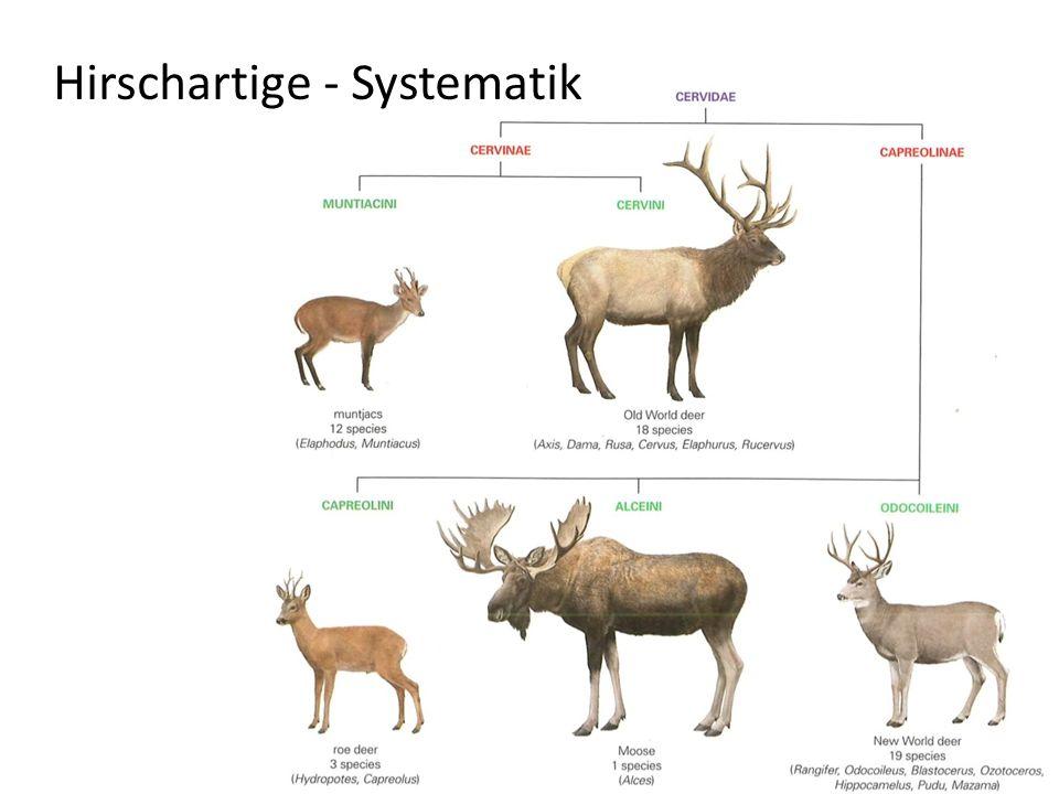 Hirschartige - Systematik