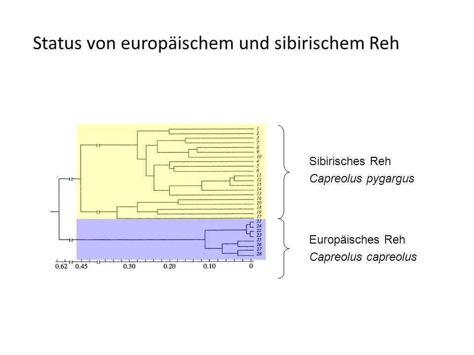 Sibirisches Reh Capreolus pygargus Europäisches Reh Capreolus capreolus Status von europäischem und sibirischem Reh