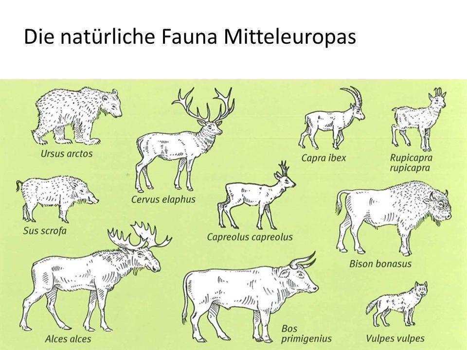 Die natürliche Fauna Mitteleuropas