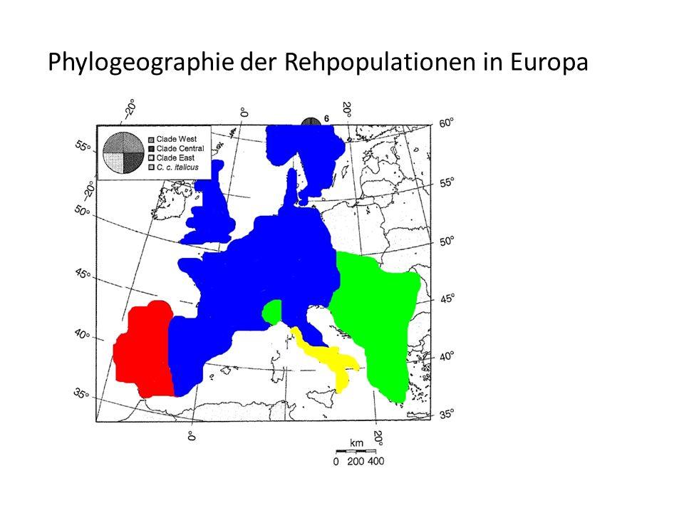 Phylogeographie der Rehpopulationen in Europa
