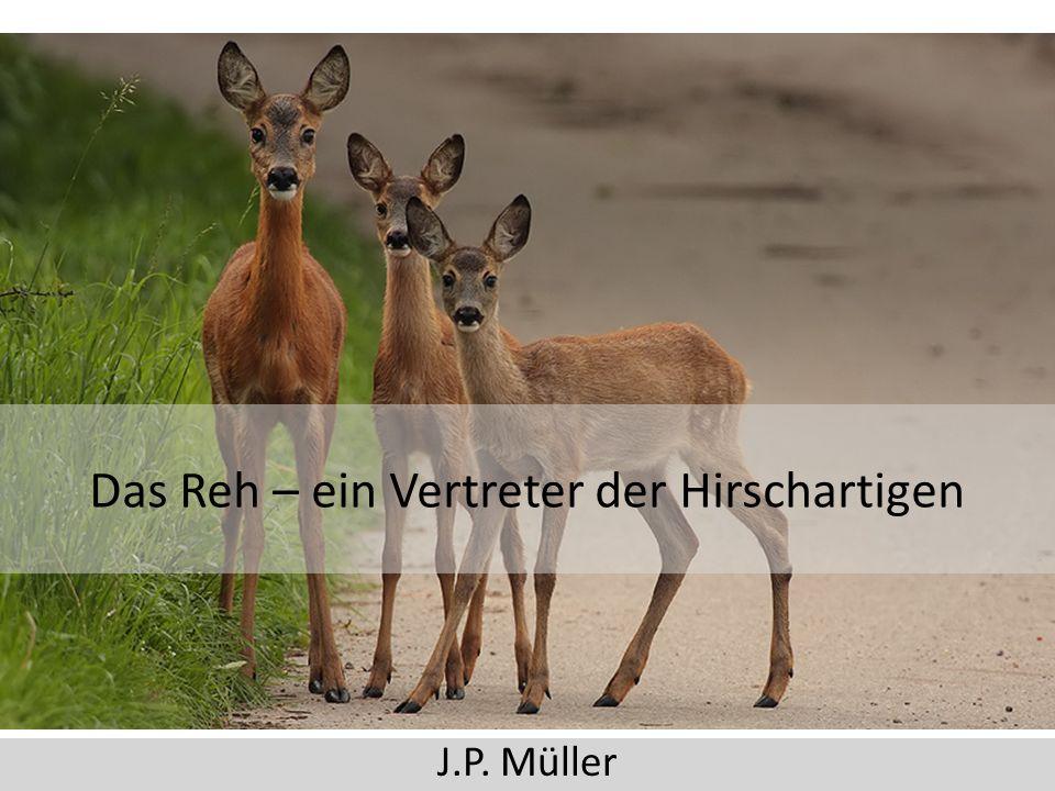 Das Reh – ein Vertreter der Hirschartigen J.P. Müller