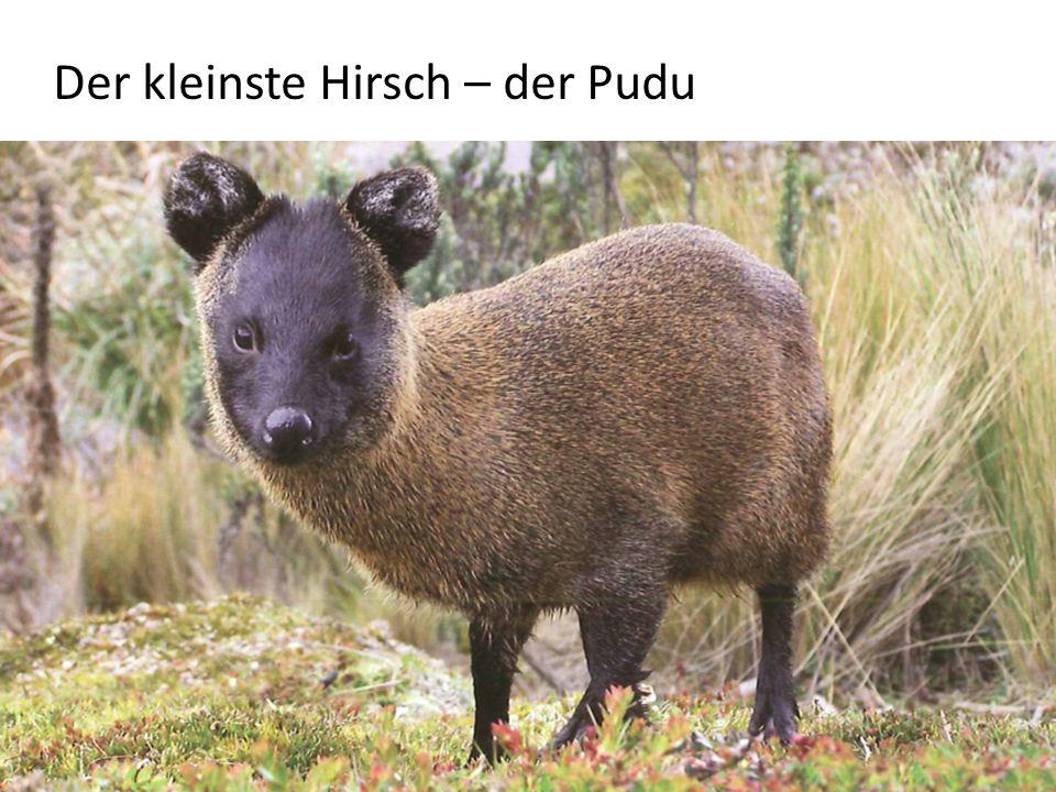 Jagdstrecke Reh (1870 – 2009)