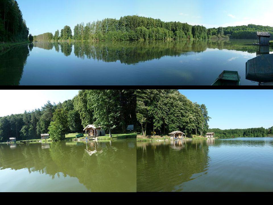 Hier noch einige Bilder vom Fischteich bei Edi in Hedrehely