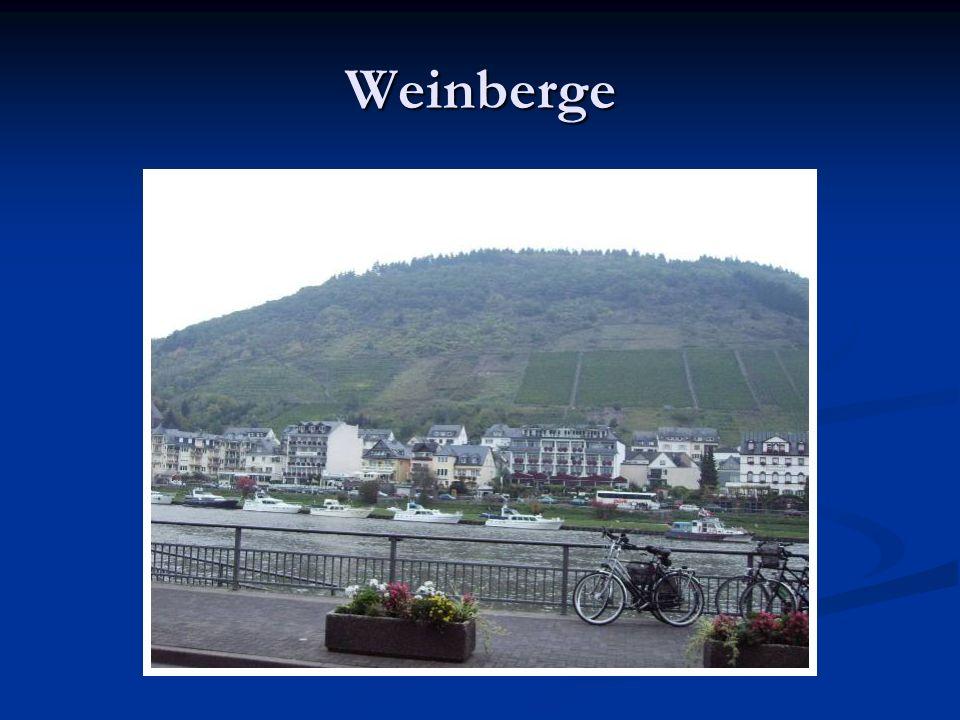 Weinberge