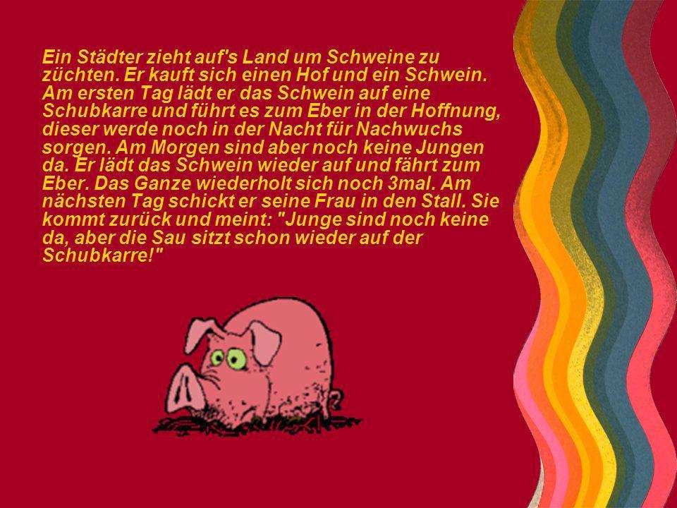 Ein Städter zieht auf's Land um Schweine zu züchten. Er kauft sich einen Hof und ein Schwein. Am ersten Tag lädt er das Schwein auf eine Schubkarre un