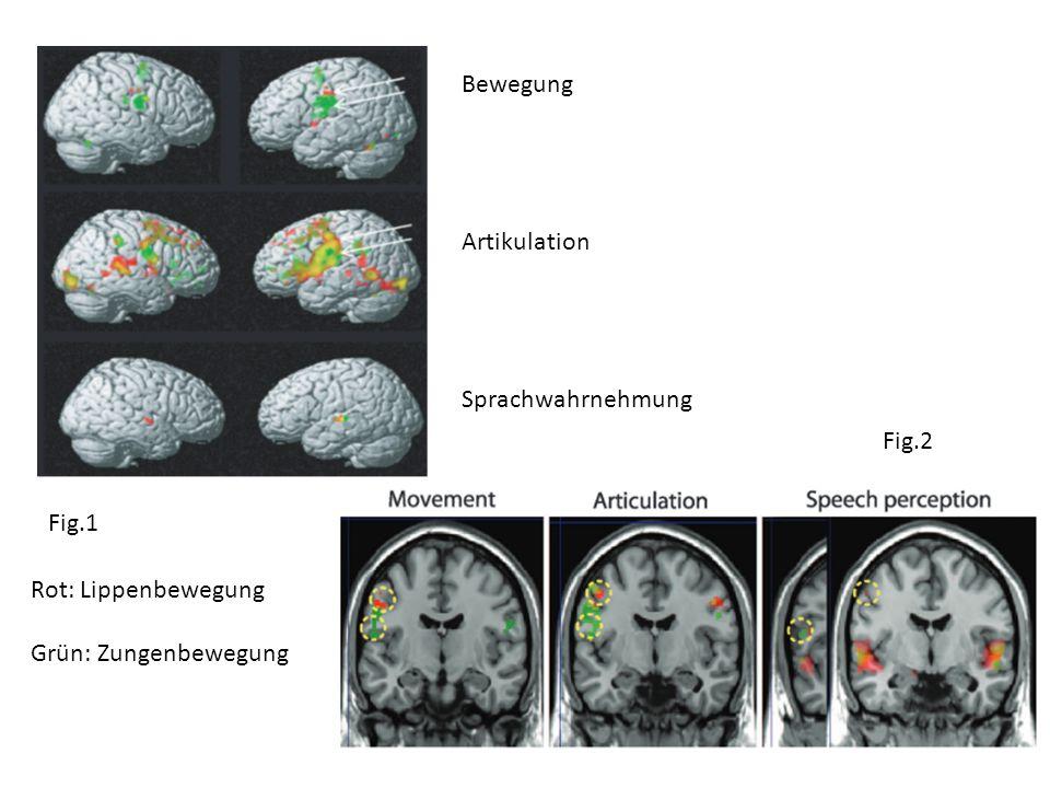 Fig.1 Fig.2 Bewegung Artikulation Sprachwahrnehmung Rot: Lippenbewegung Grün: Zungenbewegung