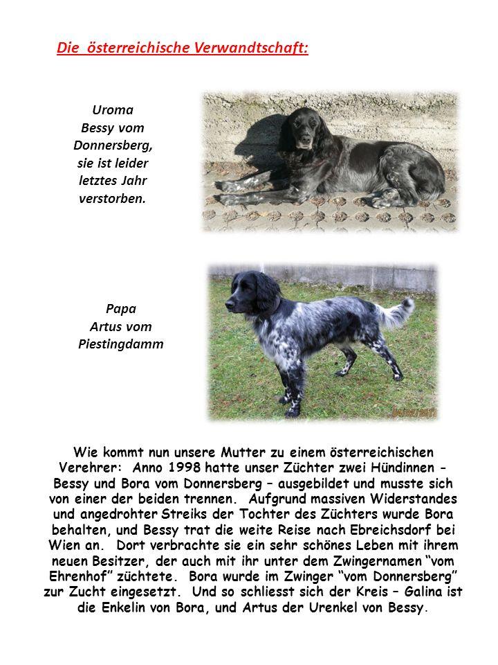 Die österreichische Verwandtschaft: Papa Artus vom Piestingdamm Uroma Bessy vom Donnersberg, sie ist leider letztes Jahr verstorben.