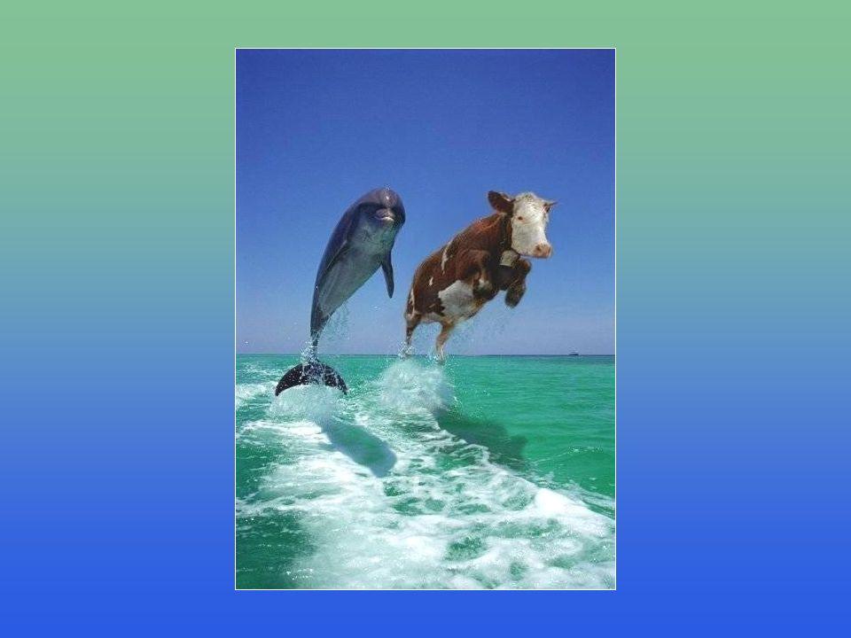 Also: Wenn Sie die beiden Delphine sehr unterschiedlich sehen, hier ein guter Rat: Räumen Sie Ihren Schreibtisch auf, gehen Sie nach Hause und ruhen Sie sich aus!