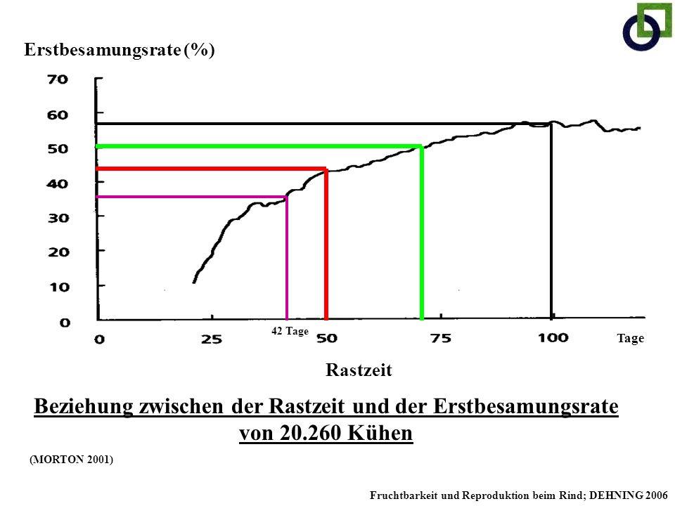 Erstbesamungsrate (%) Rastzeit Beziehung zwischen der Rastzeit und der Erstbesamungsrate von 20.260 Kühen (MORTON 2001) 42 Tage Tage Fruchtbarkeit und
