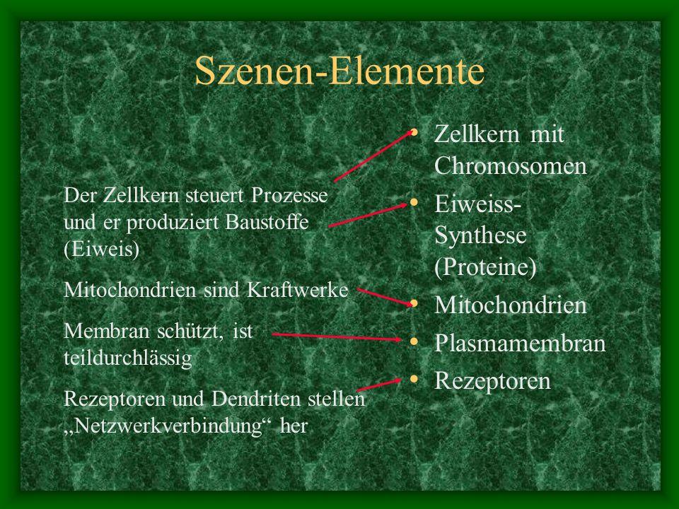 Szenen-Elemente Zellkern mit Chromosomen Eiweiss- Synthese (Proteine) Mitochondrien Plasmamembran Rezeptoren Der Zellkern steuert Prozesse und er prod