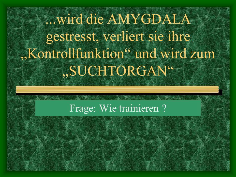 ...wird die AMYGDALA gestresst, verliert sie ihre Kontrollfunktion und wird zum SUCHTORGAN Frage: Wie trainieren ?