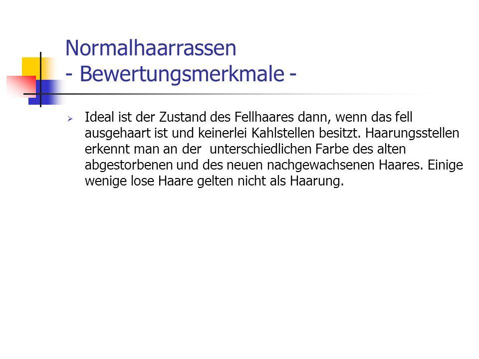 Normalhaarrassen - Bewertungsmerkmale - Ideal ist der Zustand des Fellhaares dann, wenn das fell ausgehaart ist und keinerlei Kahlstellen besitzt. Haa