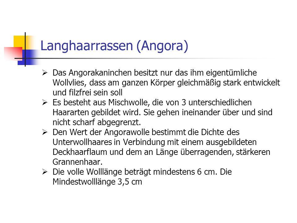 Langhaarrassen (Angora) Das Angorakaninchen besitzt nur das ihm eigentümliche Wollvlies, dass am ganzen Körper gleichmäßig stark entwickelt und filzfr