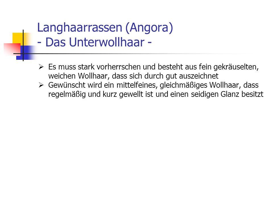 Langhaarrassen (Angora) - Das Unterwollhaar - Es muss stark vorherrschen und besteht aus fein gekräuselten, weichen Wollhaar, dass sich durch gut ausz