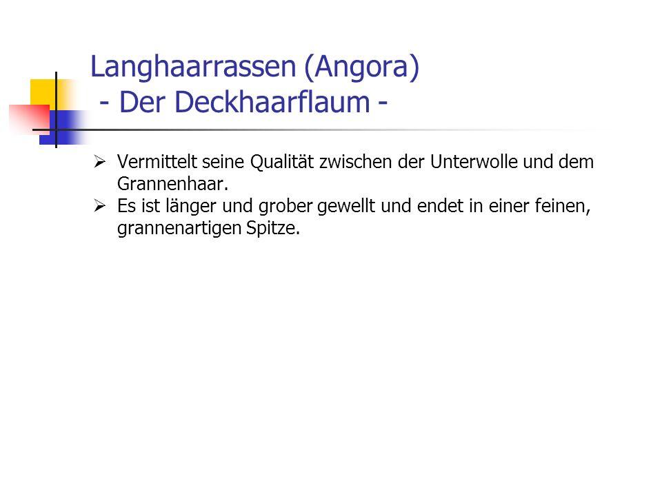 Langhaarrassen (Angora) - Der Deckhaarflaum - Vermittelt seine Qualität zwischen der Unterwolle und dem Grannenhaar. Es ist länger und grober gewellt