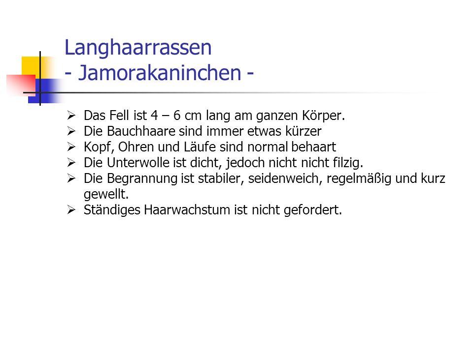Langhaarrassen - Jamorakaninchen - Das Fell ist 4 – 6 cm lang am ganzen Körper. Die Bauchhaare sind immer etwas kürzer Kopf, Ohren und Läufe sind norm