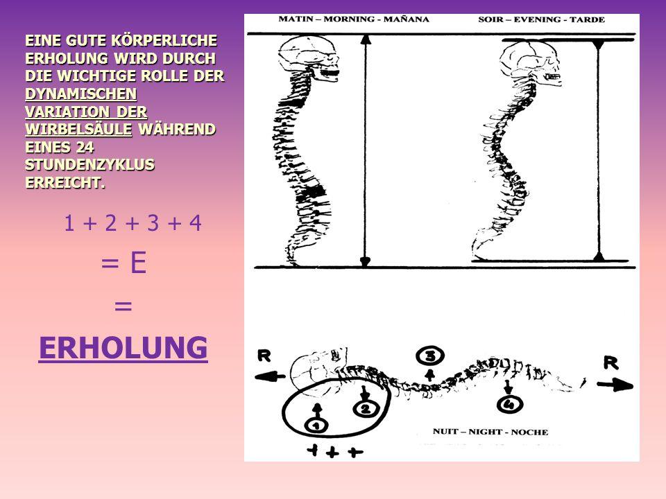EINE GUTE KÖRPERLICHE ERHOLUNG WIRD DURCH DIE WICHTIGE ROLLE DER DYNAMISCHEN VARIATION DER WIRBELSÄULE WÄHREND EINES 24 STUNDENZYKLUS ERREICHT. 1 + 2