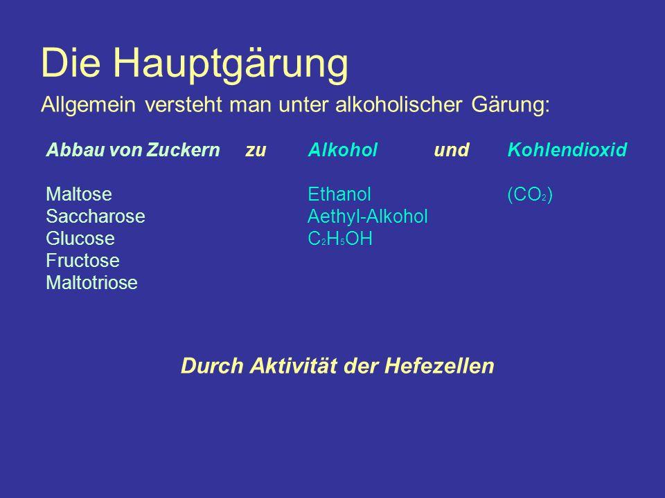 Die Hauptgärung Abbau von Zuckern Maltose Saccharose Glucose Fructose Maltotriose Allgemein versteht man unter alkoholischer Gärung: zuAlkohol Ethanol Aethyl-Alkohol C 2 H 5 OH undKohlendioxid (CO 2 ) Durch Aktivität der Hefezellen