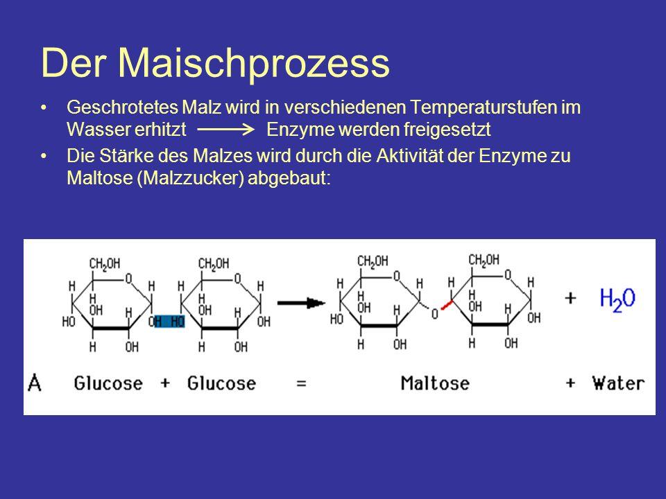 Der Maischprozess Geschrotetes Malz wird in verschiedenen Temperaturstufen im Wasser erhitzt Enzyme werden freigesetzt Die Stärke des Malzes wird durch die Aktivität der Enzyme zu Maltose (Malzzucker) abgebaut: