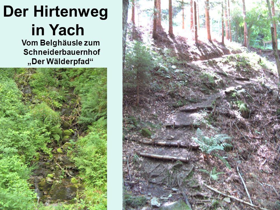 Der Hirtenweg in Yach Vom Belghäusle zum Schneiderbauernhof Der Wälderpfad