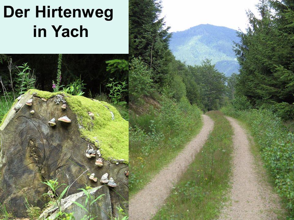 Der Hirtenweg in Yach