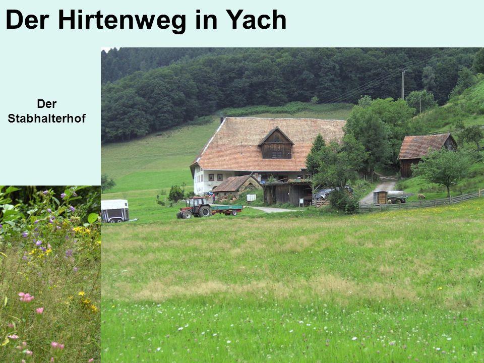 Der Hirtenweg in Yach Der Stabhalterhof