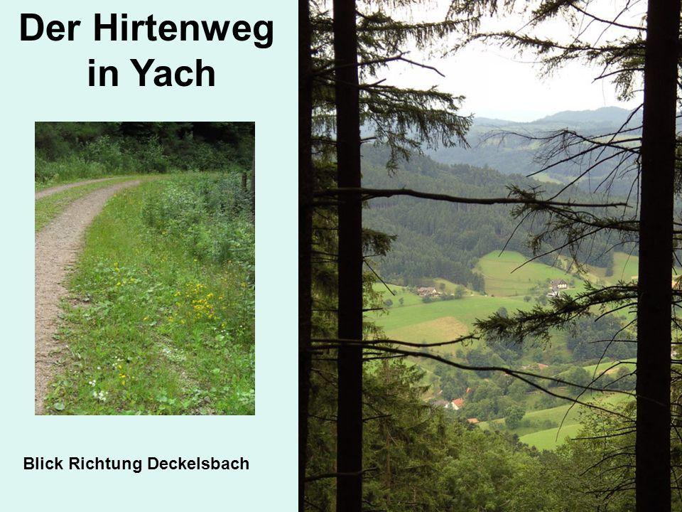 Der Hirtenweg in Yach Blick Richtung Deckelsbach