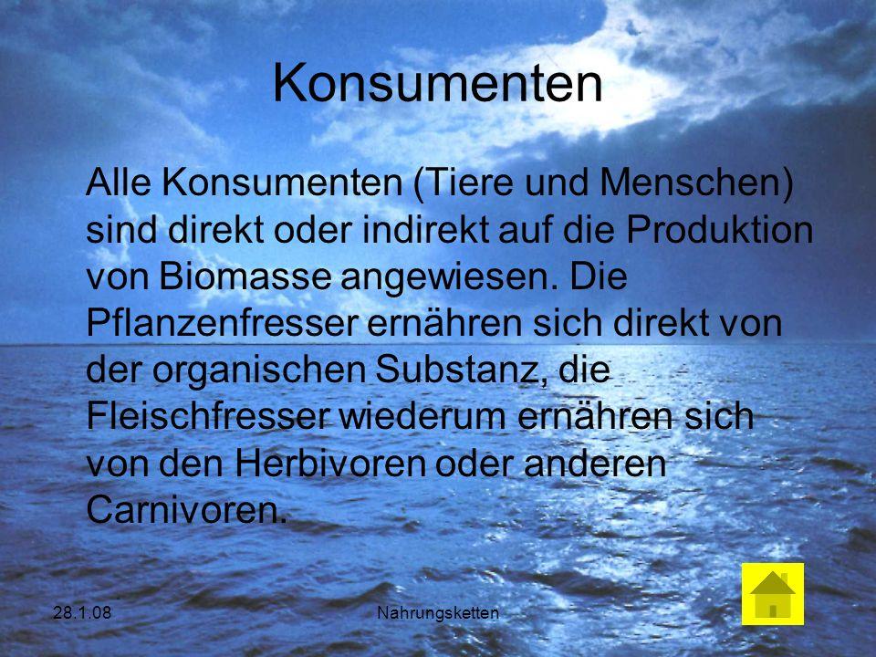 28.1.08Nahrungsketten Konsumenten Alle Konsumenten (Tiere und Menschen) sind direkt oder indirekt auf die Produktion von Biomasse angewiesen. Die Pfla