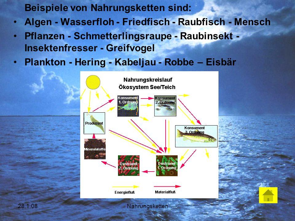 28.1.08Nahrungsketten Beispiele von Nahrungsketten sind: Algen - Wasserfloh - Friedfisch - Raubfisch - Mensch Pflanzen - Schmetterlingsraupe - Raubins