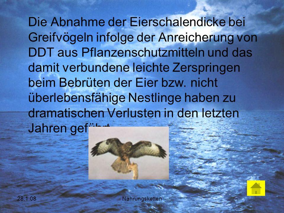 28.1.08Nahrungsketten Die Abnahme der Eierschalendicke bei Greifvögeln infolge der Anreicherung von DDT aus Pflanzenschutzmitteln und das damit verbun