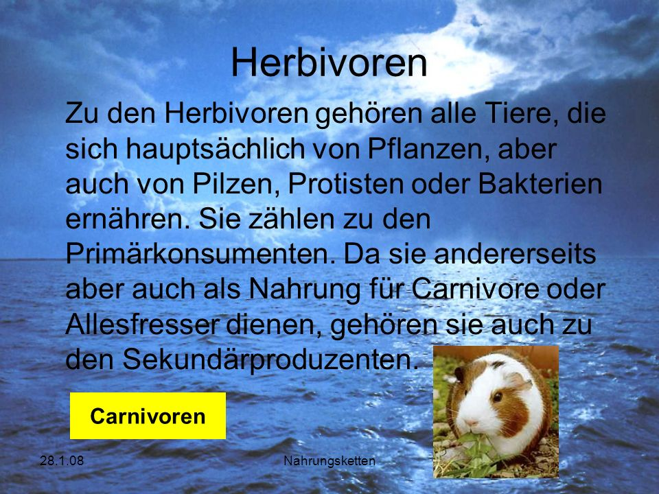 28.1.08Nahrungsketten Herbivoren Zu den Herbivoren gehören alle Tiere, die sich hauptsächlich von Pflanzen, aber auch von Pilzen, Protisten oder Bakte