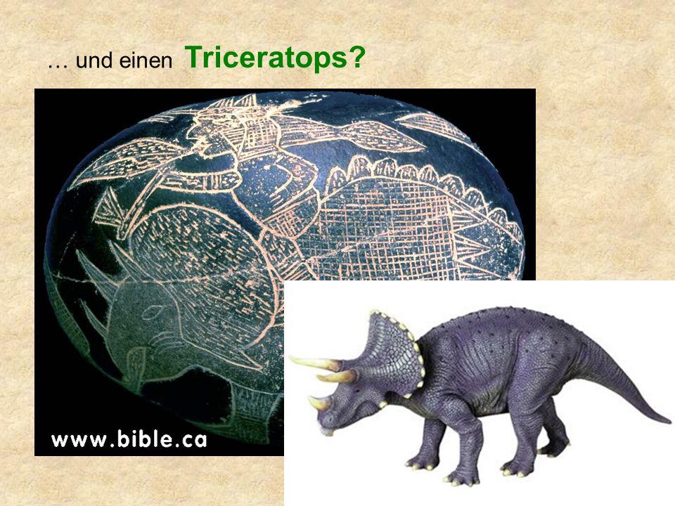 … und einen Triceratops?