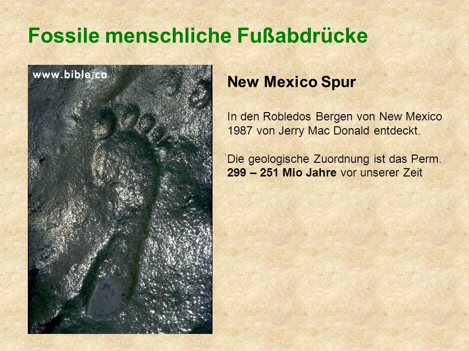 Fossile menschliche Fußabdrücke New Mexico Spur In den Robledos Bergen von New Mexico 1987 von Jerry Mac Donald entdeckt.
