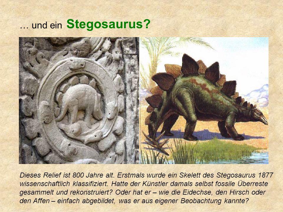 … und ein Stegosaurus.Dieses Relief ist 800 Jahre alt.