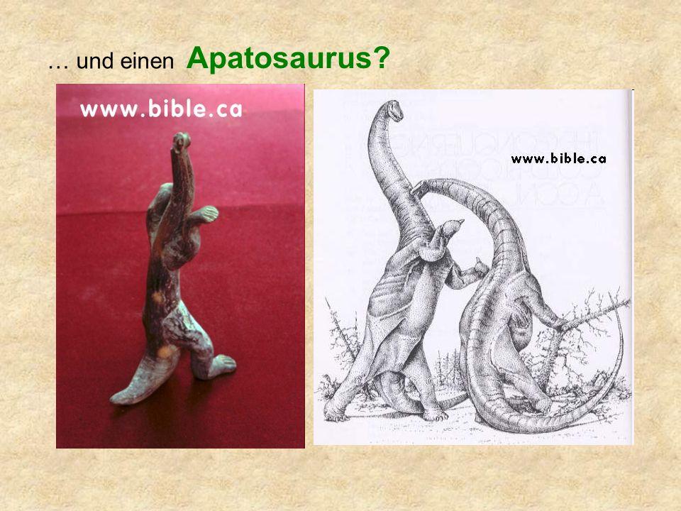 … und einen Apatosaurus?