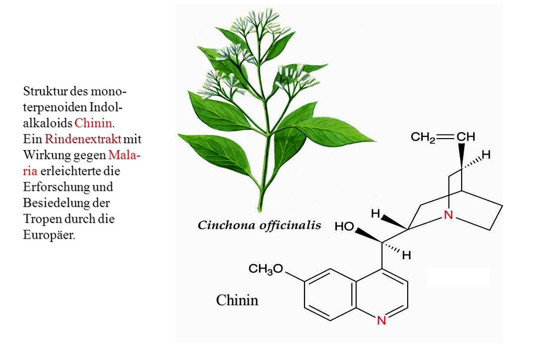A) Strukturen der Alkaloide Codein und Morphin aus Papaver somniferum.