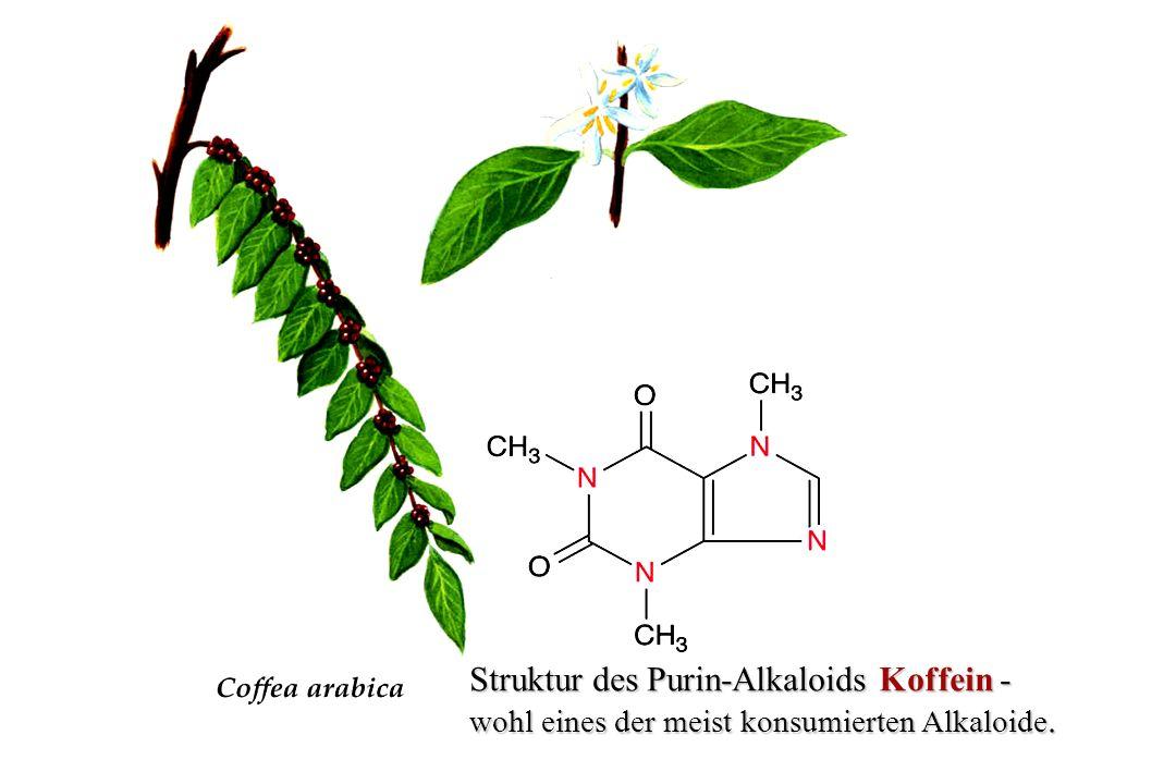 Struktur von Nikotin - wohl eines der bekanntesten Stimulanzien.