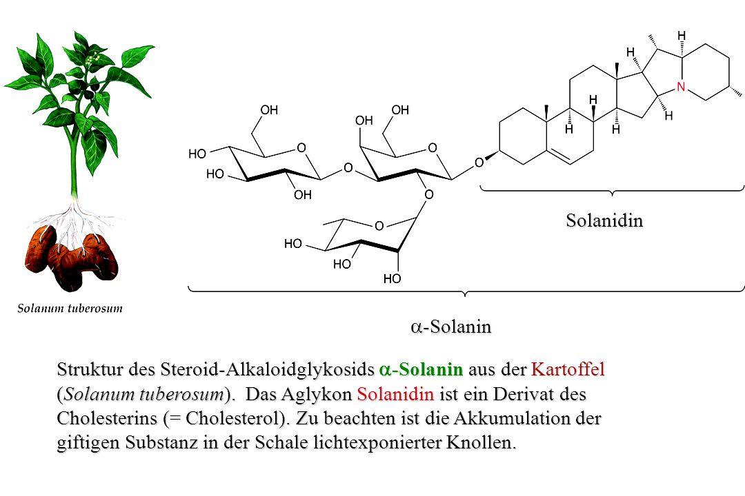 Struktur des Purin-Alkaloids Koffein - wohl eines der meist konsumierten Alkaloide.