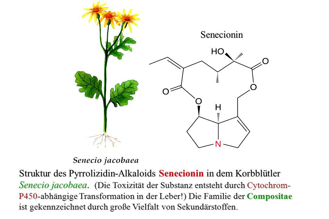 -Solanin -Solanin Solanidin Struktur des Steroid-Alkaloidglykosids -Solanin aus der Kartoffel (Solanum tuberosum).