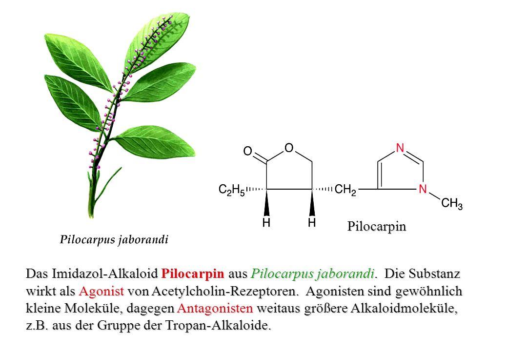 Vinblastin Struktur des monoterpenoiden Indol-Alkaloids Vinblastin aus Catharanthus roseus.