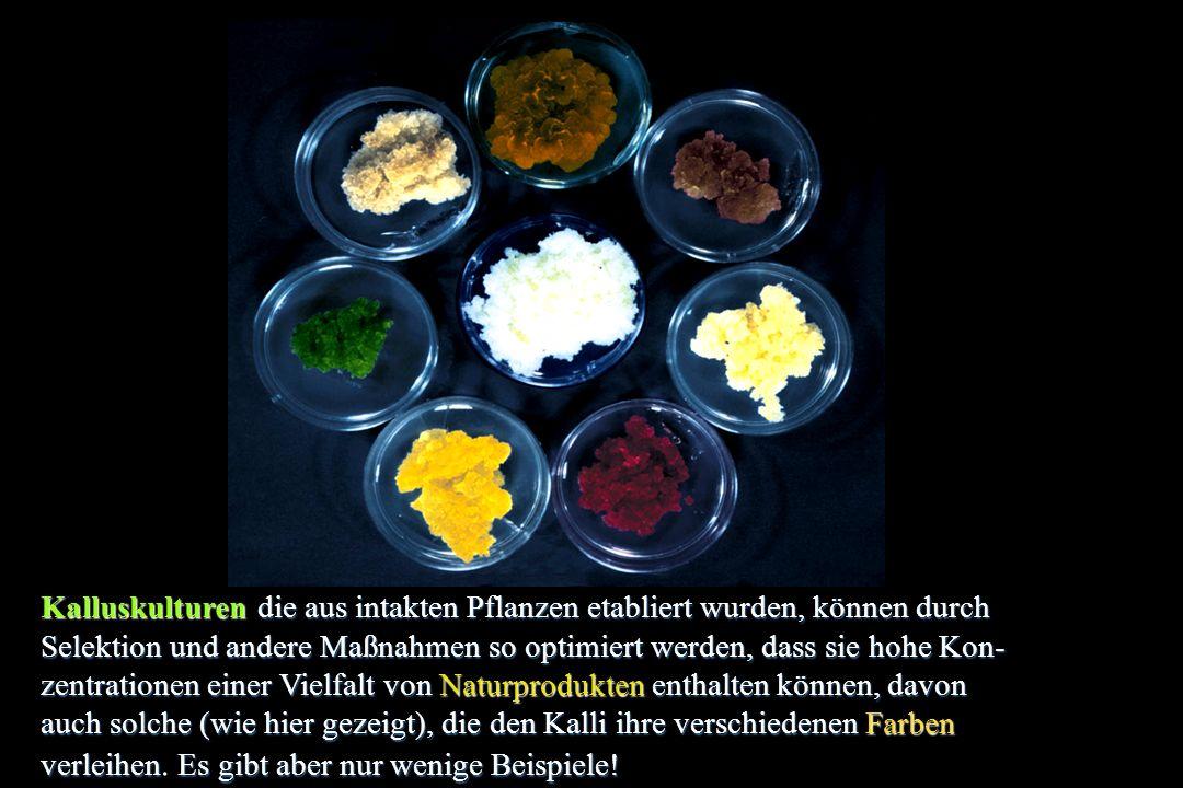 Pflanzen mit Sekundär- metaboliten ExtrakteIsolierteProdukte Biopestizide Eigenschaften fungizid, antiviral, insektizid, herbizid Phytotherapie Aromastoffe, Gewürze Duftstoffe, Parfume FarbstoffeGifteStimulanzien,Halluzinogene Eigenschaften schmerzbetäubend, entzündungshemmend, antiarrhytmisch, antibacterizid, antidepressiv, schleimlösend, antiparasitisch, migränehemmend, antineoplastisch, antiviral, Rezeptor- Agonist/-Antagonist, kardiotonisch, dermatologisch, harntreibend, gastrointestinal, muskelentspannend, stimulierend, gegen Gefäßkrankheiten