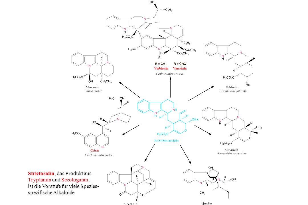 Tryptamin Secologanin Strictosidin-Synthase Glucosidasen I & II Strictosidin spontan Aglycon spontan Dialdehyd 4,21-Dehydrogeissoschizin Reductase Cathenamin