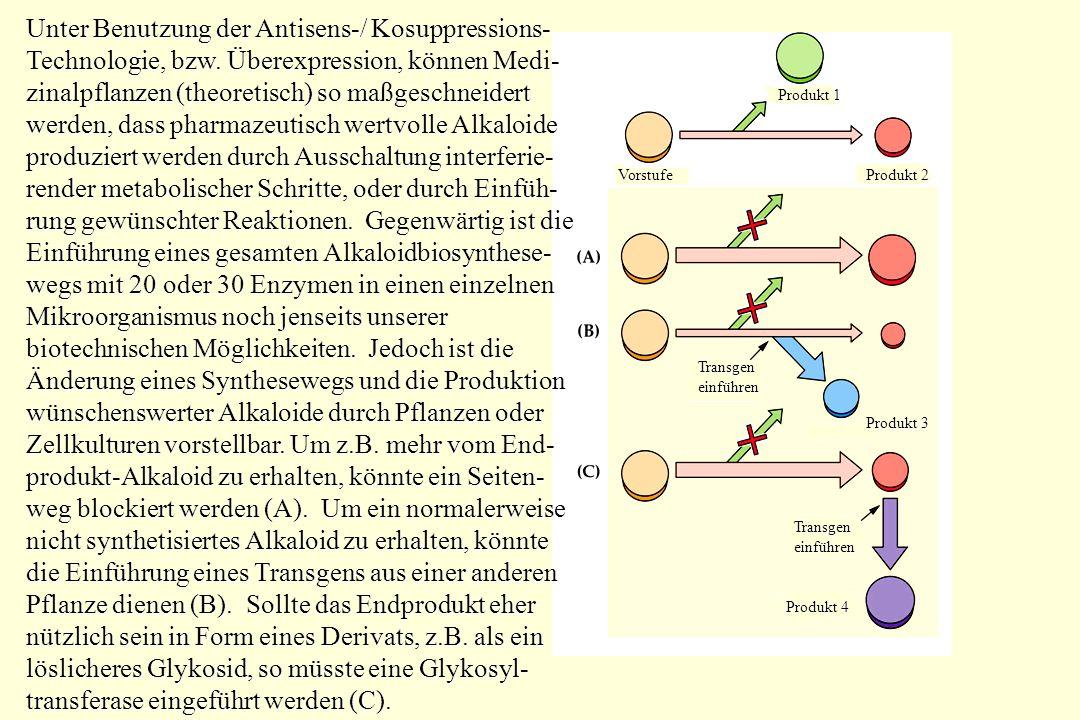 (S)-Reticulin- Oxidase Oxidase 1,2-Dehydro-reticulinion-Reductase 1,2-Dehydroreticulinium-Ion Salutaridin- Synthase SynthaseSalutaridin-Reductase Salutaridinol- Salutaridinol- O-acetyltransferase spontan Codeinon-Reductase Die Isolierung und Charakterisierung aller Enzyme der Morphin-Biosynthese im Schlafmohn (Papaver somniferum) ist beinahe komplett >190 Jahre nach der Entdeckung des Alkaloids.