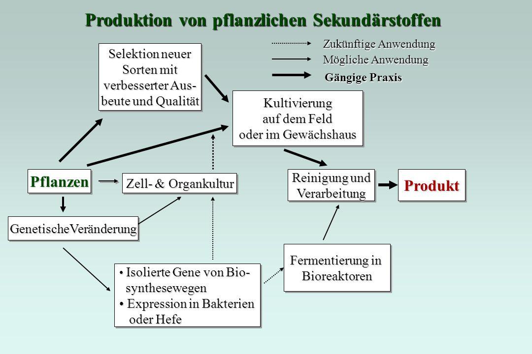 Produkt 4 Transgeneinführen Produkt 3 Transgeneinführen Vorstufe Produkt 2 Produkt 1 Unter Benutzung der Antisens-/ Kosuppressions- Technologie, bzw.