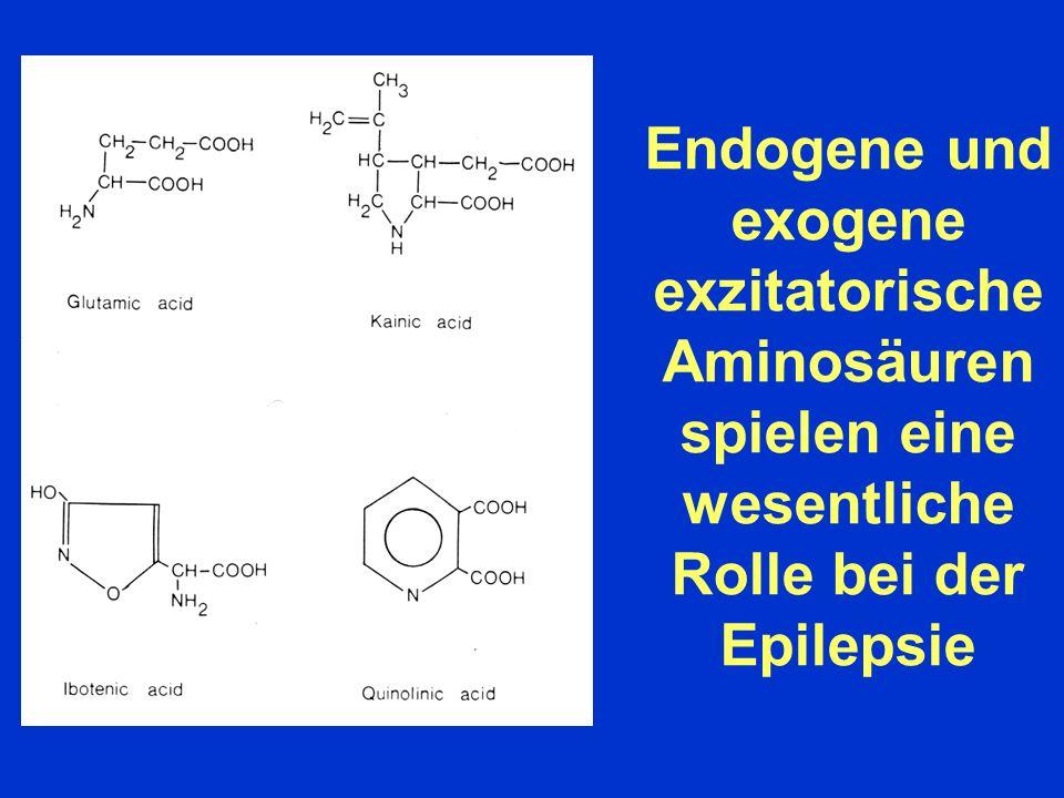 Kainsäure ist ein Agonist eines glutamatergen exzitatorischen Aminosäure-Rezeptor- Subtyps GLUTAMATE RECEPTORS NMDA AMPA KAINATE METABOTROPIC Glutamate Site Glycine Site Agonists: NMDA Glycine Quisqualic acid Kainic acid L-AP4 D-Serin AMPA Domoic acid ACPD R-HA966 Selective Antagonists: KYNA KYNA KYNA KYNA MCPG AP-5 7-Cl-KYNA NBQX CNQX AP-7 5,7-Cl-KYNA GYKI 52466 CGS MNQX CGP L-689,560 CPP Effector pathways: NA+/K+/Ca2+ NA+/K+/Ca2+ NA+/K+/Ca2+ IP3DAG J.