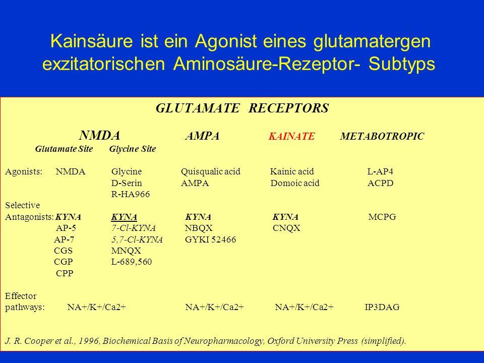 Kainsäure ist ein Agonist eines glutamatergen exzitatorischen Aminosäure-Rezeptor- Subtyps GLUTAMATE RECEPTORS NMDA AMPA KAINATE METABOTROPIC Glutamat