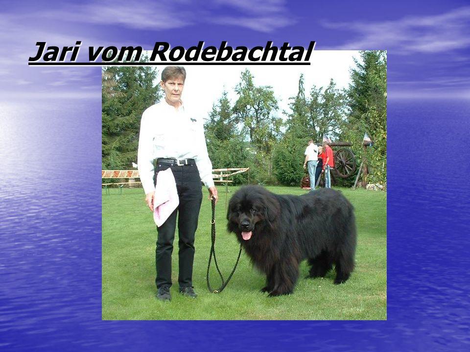 Jari vom Rodebachtal