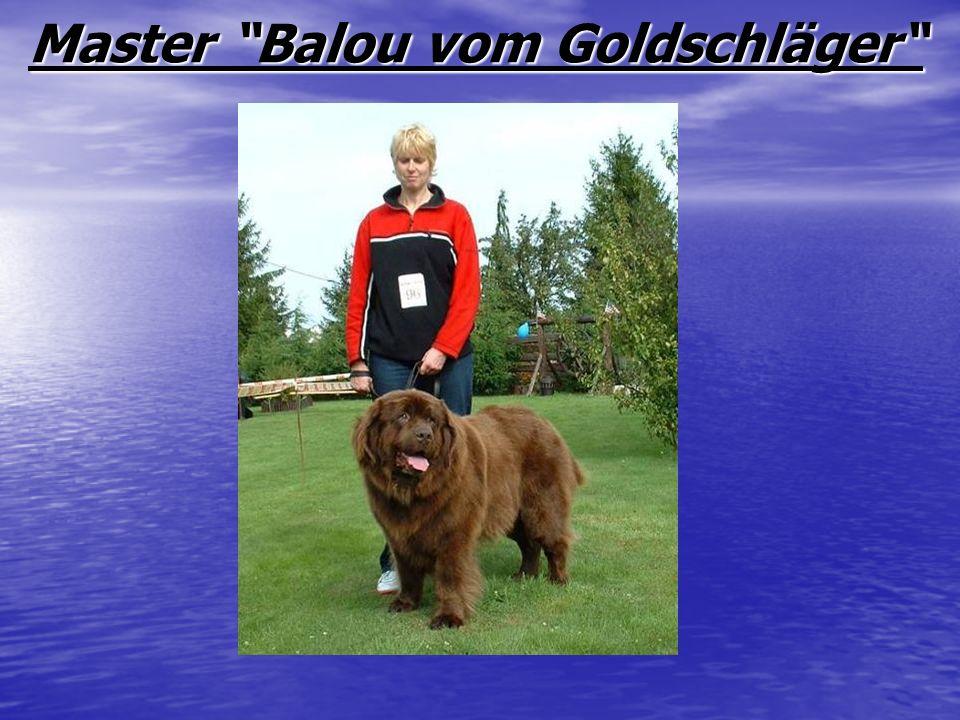 Master Balou vom Goldschläger