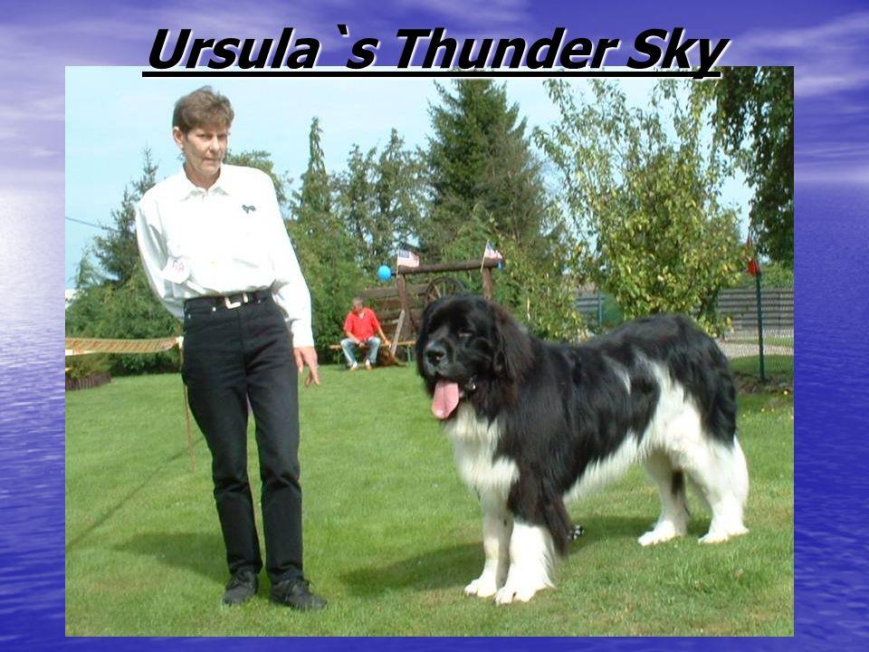 Ursula`s Thunder Sky